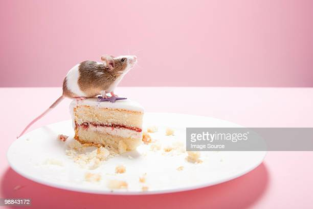 Mouse and slice of cake on plate