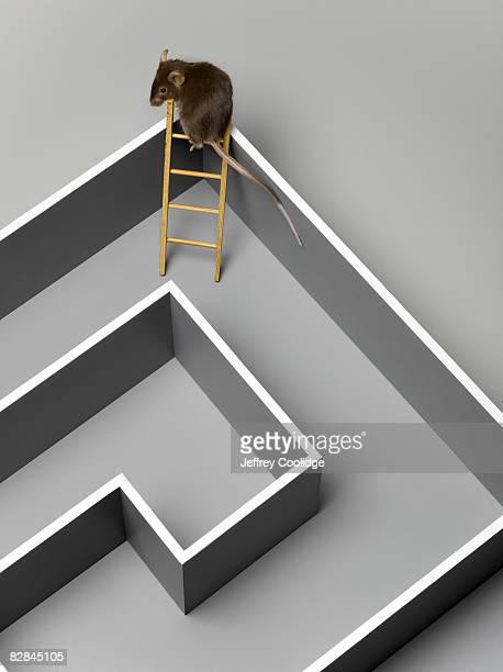 Mouse escaping maze
