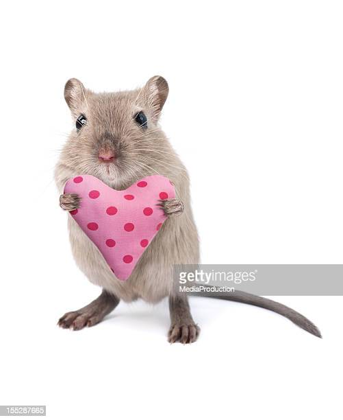 mouse holding a heart shaped cushion - cute mouse stock pictures, royalty-free photos & images