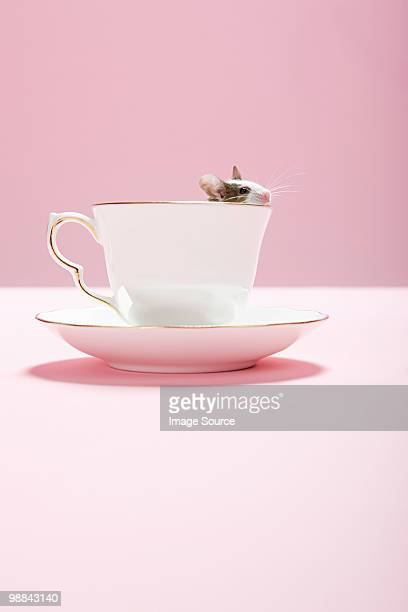 mouse in a teacup - tea cup stock pictures, royalty-free photos & images