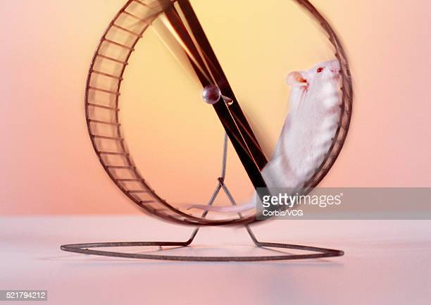 Mouse on a Wheel