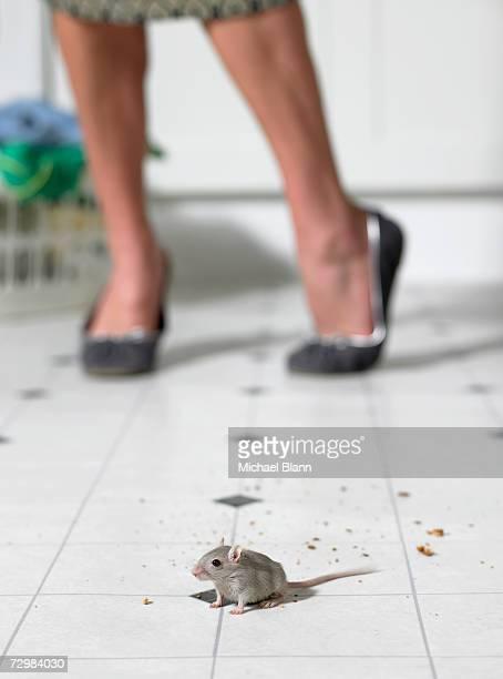 Mouse on kitchen Etage, Frau stehend im Hintergrund, niedrige sectio