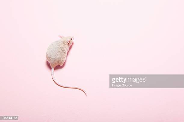 mouse - cute mouse stock pictures, royalty-free photos & images