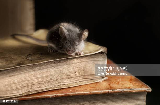 Mouse sitting on book