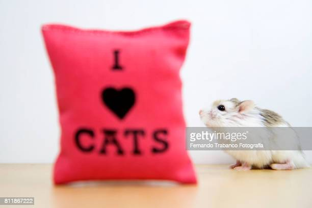 mouse with cushion i love cats - cute mouse stock pictures, royalty-free photos & images