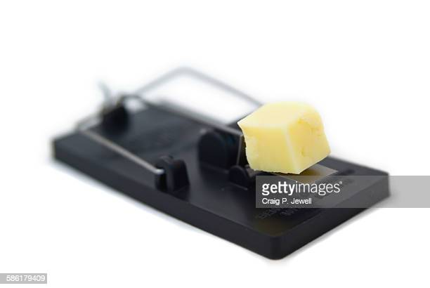 Mousetrap, baited with cheese