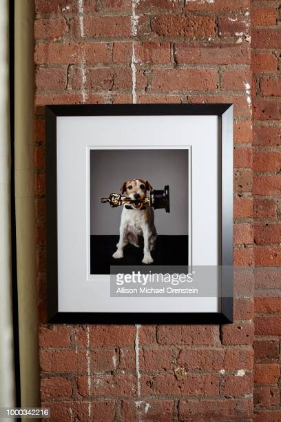 Movie producer Harvey Weinstein's office is photographed for The Hollywood Reporter on March 27 2017 in New York City Photo of Uggie from 'The...