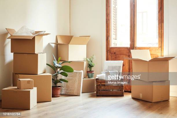 moving boxes and potted plants at new apartment - carton stock photos and pictures