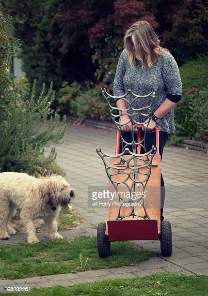 movingfurniture - soft coated wheaten terrier stock photos and pictures