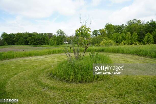 mowed lawn, wisconsin, usa - vilas_county,_wisconsin stock pictures, royalty-free photos & images