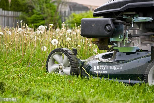 Mowing the grass...