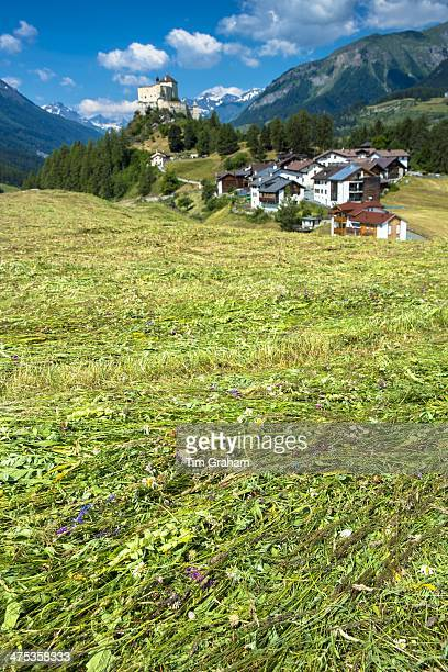 Mown hay with wildflowers in the Lower Engadine Valley Switzerland