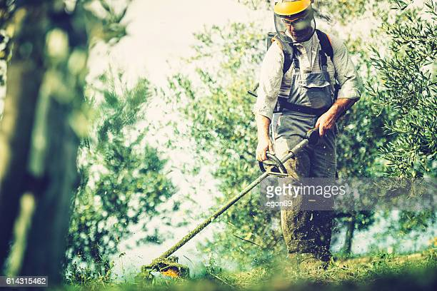 mows the grass - tuinieren stockfoto's en -beelden
