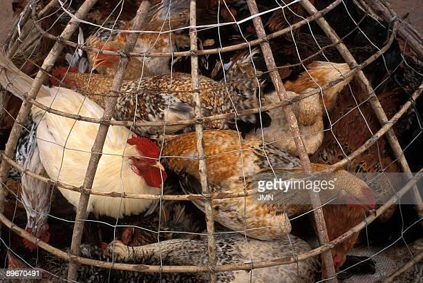 Mozambique Inhambane Hens in the market