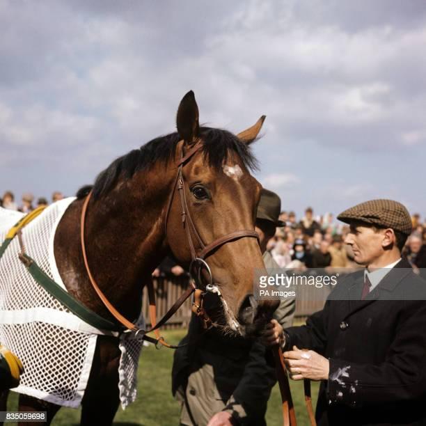 Mr Charles Englehard's fine racehorse 'Nijinsky'