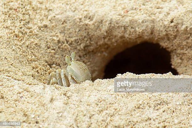 mr. crab - buraco imagens e fotografias de stock