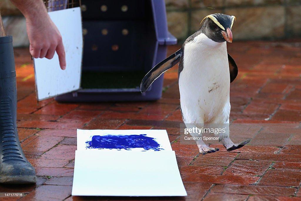Taronga Zoo Animals Paint Canvas With Footprints : News Photo