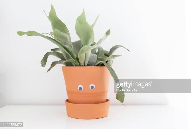 mr plant - googly eyes stock pictures, royalty-free photos & images