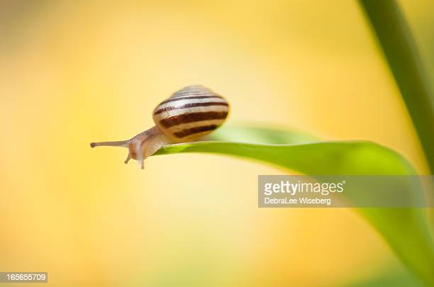 mr. snail in yellow - garden snail stock photos and pictures