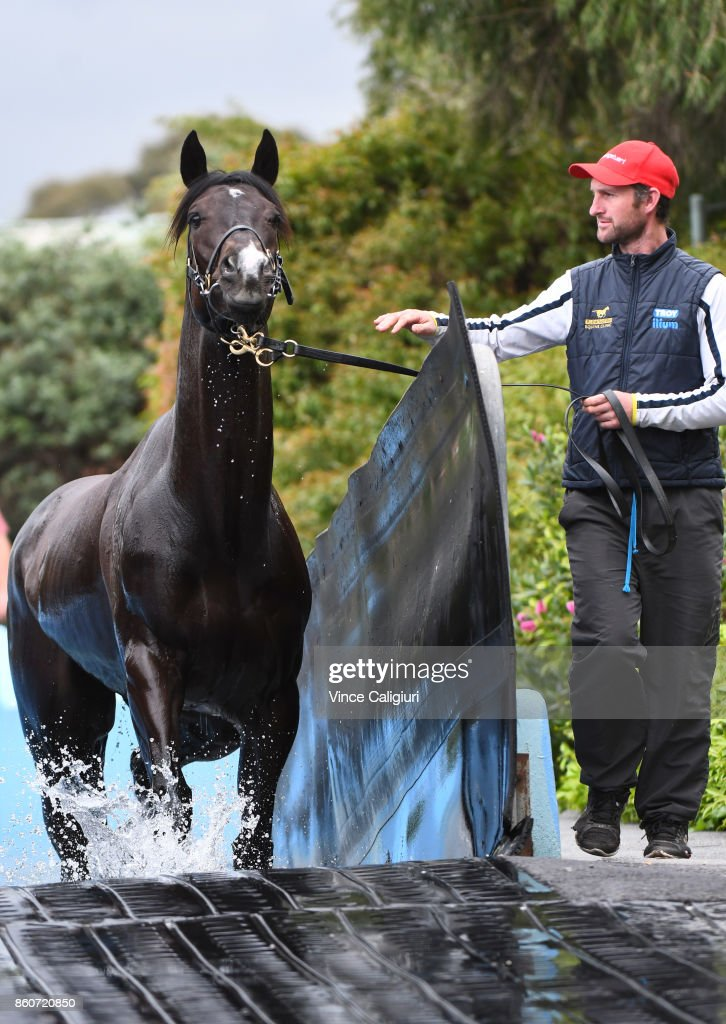 Mr Sneaky from the Anthony Freedman stable is taken for a swim during a Trackwork Session at Flemington Racecourse on October 13, 2017 in Melbourne, Australia. Mr Sneaky will contest the Group One Toorak Handicap at Caulfield tomorrow.