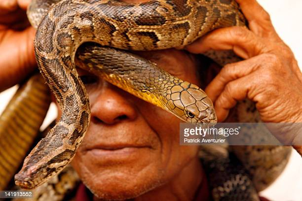 Mr Vukjow Mare poses with a King Cobra during April 2010 in Ban Khok SangaThailand Ban Khok Sanga village also known as the King Cobra village the...