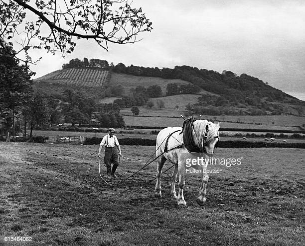 Mr W Pullin working with his horse to harrow his land a rare sight in 1962 | Location Dixton Hill Teddington Gloucestershire England