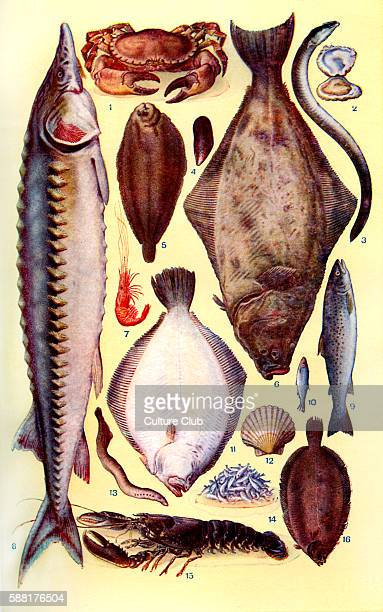 Mrs Beeton s cookery book fish Crab Oyster Eel Mussel Lemon sole Halibut Prawn Sturgeon Trout Sprat Brill Scallop Lamprey Whitebait Lobster Dover...