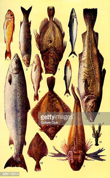 Mrs Beeton s cookery book fish Red mullet Grayling John dory Mackerel Cod Whitling Salmon Herring Plaice Flounder Gurnet Crayfish New edition of the...