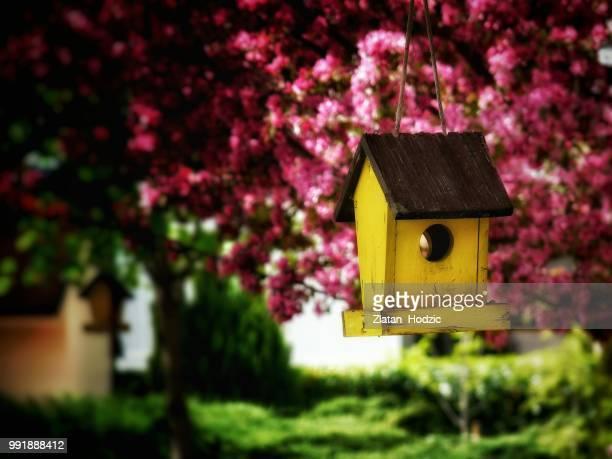 Mrs. Birdie's House