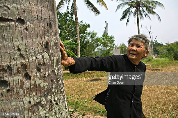 Mrs Ha Thi Quy survivor of the My Lai massacre points to bullet marks left on a coconut tree Her mother a daughter and a son were killed in the...