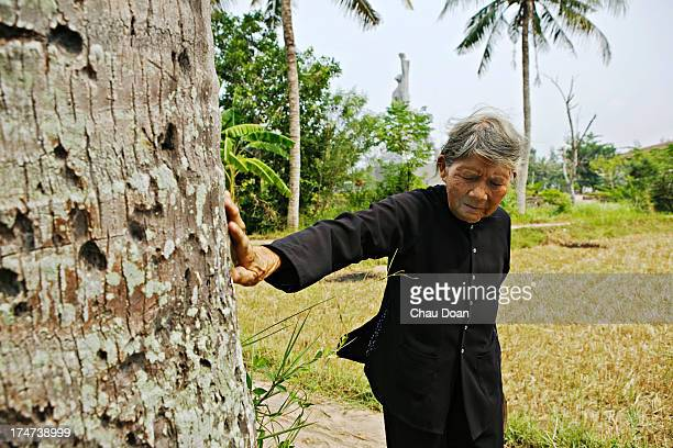 Mrs Ha Thi Quy survivor of the My Lai massacre, points to bullet marks left on a coconut tree. Her mother, a daughter and a son were killed in the...