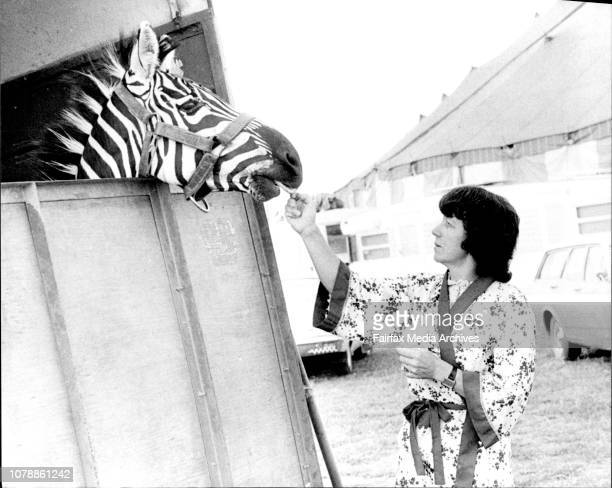 Mrs Lorraine Grant with Bwana he zebra which bit off her husband's thumb at Ashton's Circus last night