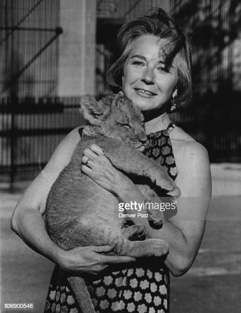 Mrs Robert Kemper holds 'Moki' 3monthold lion cub who will not be in attendance at the Sugar Plum Ball Credit Denver Post