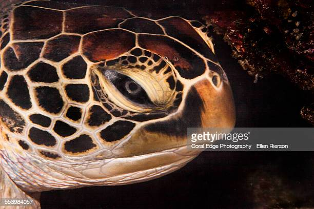 Mr.Turtle