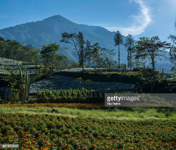 PROJECT BESAKIH BALI INDONESIA Mt Agung in Bali seen here from an outlying hamlet of Besakih on the 19th has been placed on a level 3 volcanology...