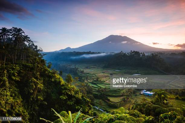mt agung volcano and rice terraces at dawn, bali - indonesien stock-fotos und bilder