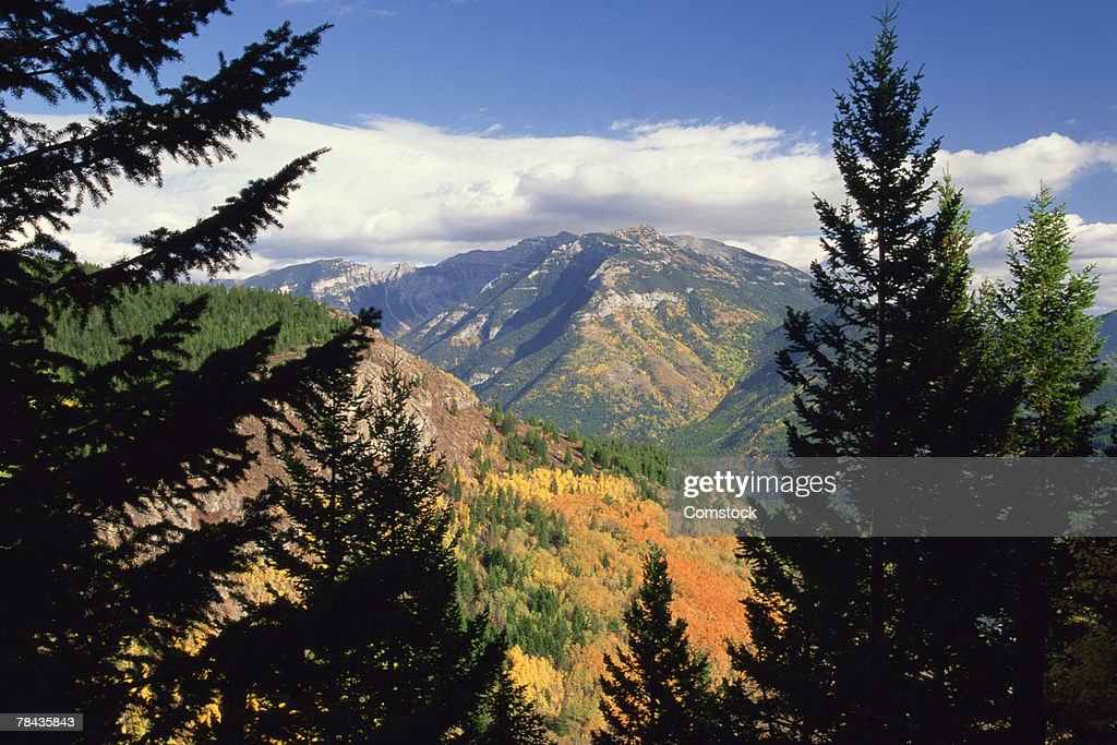 Mt. Broadwood with forest in East Kootenays , British Columbia , Canada : Stockfoto