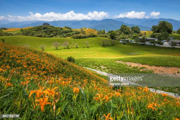 mt. chike and mt. lioushidan are the two major places in hualien for picturesque daylily fields from - hualien county stock pictures, royalty-free photos & images