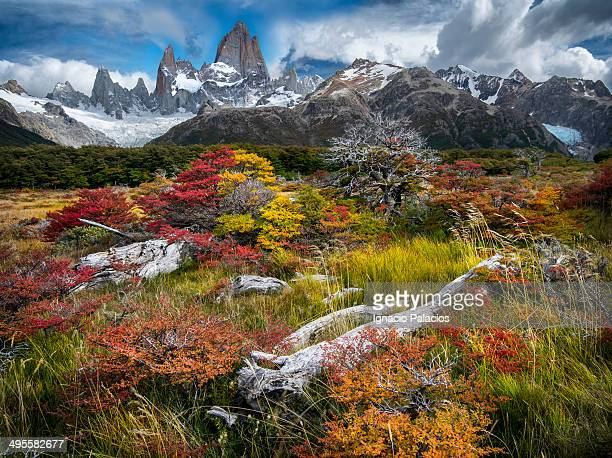 mt fitz roy in colorfull autumn vegetation - chalten stock pictures, royalty-free photos & images
