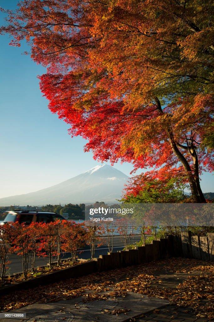 Mt. Fuji and a Maple Tree : Stock-Foto