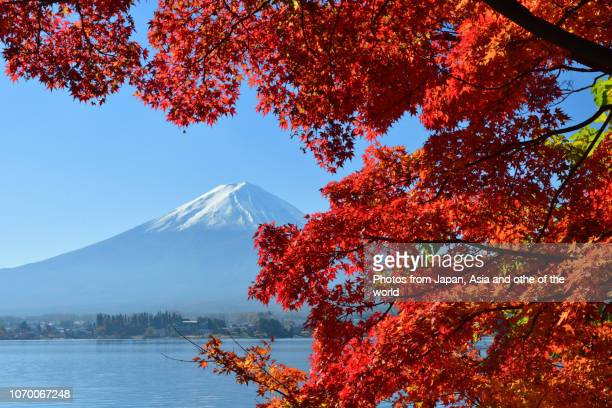 mt fuji and autumn foliage: view from lake kawaguchi - 紅葉 ストックフォトと画像