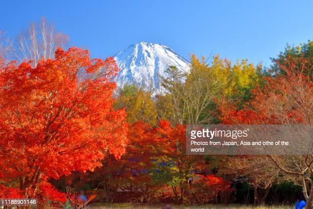 mt fuji and autumn leaf color, taken in fujinomiya and fuji five lakes region - 十一月 ストックフォトと画像