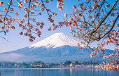 Mt. Fuji and Cherry Blossom