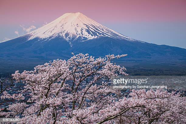 mt fuji and cherry blossom - mount fuji stock photos and pictures