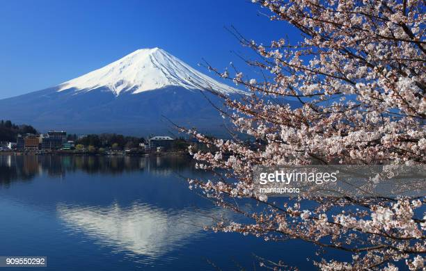 Mt Fuji and cherry blossoms at Lake Kawaguchiko, Japan