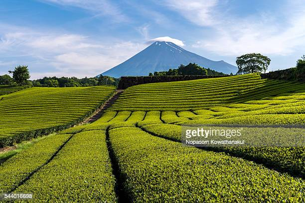 Mt. Fuji and green tree of Shizuoka