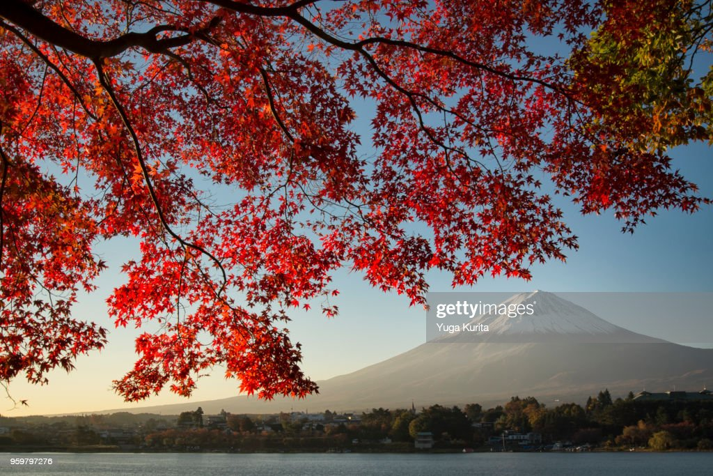 Mt. Fuji and Maple Leaves : Stock-Foto