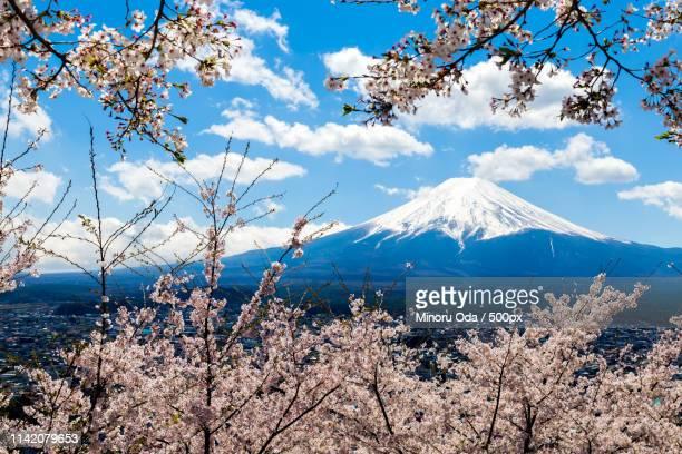 mt fuji and sakura at fuji-yoshida city - minoru yoshida bildbanksfoton och bilder