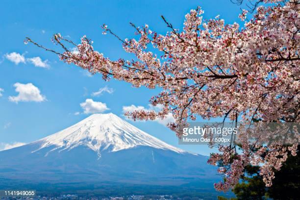 mt fuji and sakura at fuji-yoshida city, yamanashi, japan - minoru yoshida bildbanksfoton och bilder