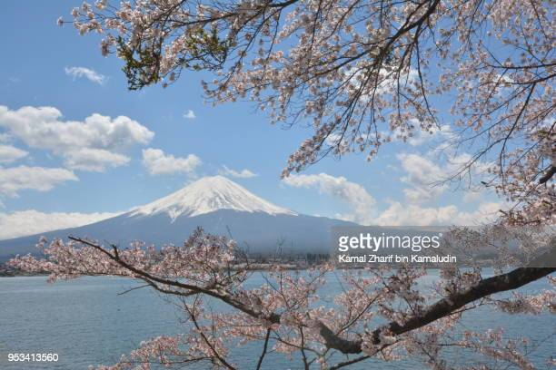 Mt Fuji and sakura